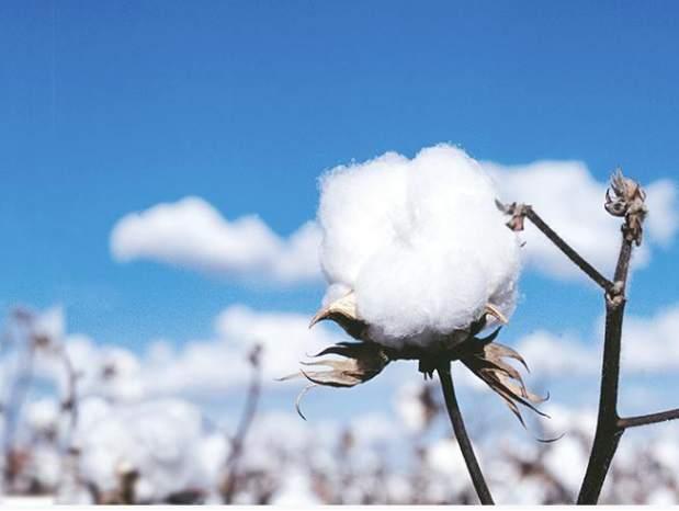中国纺织工业联合会声明